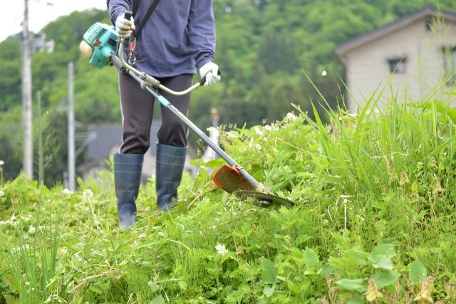 郡山市で草刈りに最適な年3回の時期~楽に草刈りを終えるコツまで徹底解説